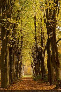Allée en automne dans le bois de Vincennes - Bois de Vincennes, Paris