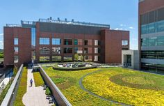 Green roof at the University of Minnesota Cancer & Cardiovascular Research Building.  Minneapolis, MN. Sedum, Sedums, Pattern, LiveRoof, Trays, Greenroof, Intensive, Extensive, Stormwater Management, DAMON FARBER