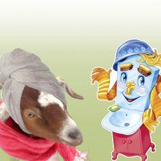 Все про мытье коз Cute Goats, Bucket Hat, Hats, Bob, Hat, Hipster Hat, Panama