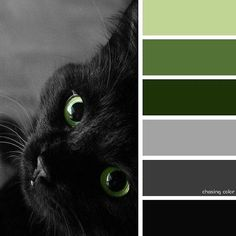 Shades Of A Green-Eyed Black Cat (Photo Credit • hubpages.com/holidays/the-lore-of-the-black-cat) #chasingcolor #colorthemes #colorful #color #palette #colorpalette #shades #tones #hues #colorinspiration #inspiration #creative #art #photography #design #theme #cat #kitty #kitten #blackcat #greeneyes #green #beautiful #animal