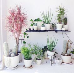 decorating with plants decor8 daily