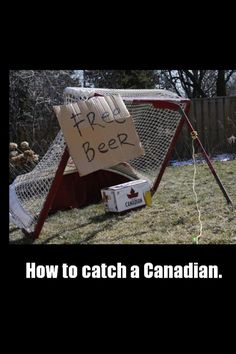 A funny picture showing a crazy way to catch a Canadian. You have to make a trap and put some beers as a bait. Soon the Canadian will be caught. Canadian Memes, Canadian Things, I Am Canadian, Canadian Humour, Canadian Facts, Canadian People, Canada Funny, O Canada, Canada Jokes
