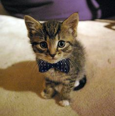 If Matt Smith were a kitten. He would be this kitten.