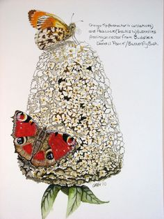 Cath Hodsman, dagpauwoog op vlinderstruik Peacock Butterfly, Peafowl, Butterflies Flying, Insect Art, Gcse Art, Shape And Form, Art Inspo, Crochet Hats, Birds