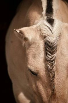 Cute braid for a horse too!