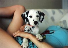 adopting a stray Dalmatian today to be my marathon training buddie :)