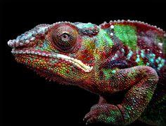 Chameleon by Bunny Kasper