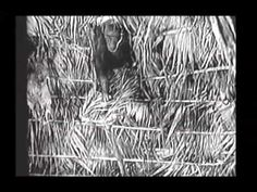 Serial - Queen of the Jungle (1935)
