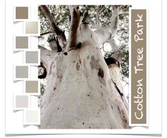 The Sunshine Coast Design Post - Blog On! — Rubykite Interiors. Cotton Tree Towering Gum.