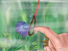 How to Play With Your Betta Fish: 7 Steps (with Pictures)