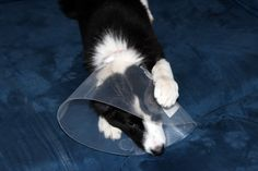 Pet First Aid Kit Info