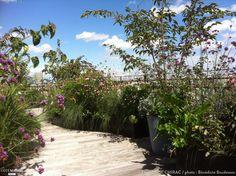 Un jardin de fleurs sur le toit d'un appartement, planté de marguerites, rosiers, verveines, cornouiller, fraisiers, véronique, hortensias Rooftop Design, Rooftop Terrace, Terrace Garden, Rooftop Gardens, Terrazzo, Outdoor Living, Planters, Exterior, Landscape