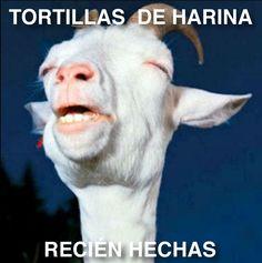 #Tortillas #Cabra #Harina #Monchis #Saltillo
