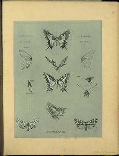 Papillons - ID: 102332 - NYPL Digital Gallery