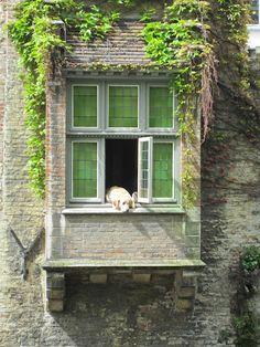 Dog taking a nap - Bruges, 2012