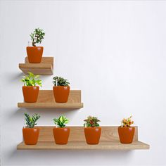 Self Watering planters have been creatively made to help every gardener from incurring excessive maintenance costs in any way. It's likewise, one of the greatest and efficient methods in conserving obtainable resources. - See more at: http://blog.yuccabeitalia.com/self-watering-planters-provide-an-ultimate-plant-growing-system/#sthash.vv0fE0M8.dpuf