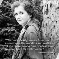 """Rachel Carson Marine biologist, ecologist, environmentalist, and author of """"Silent Spring"""" Quotable Quotes, Me Quotes, Nature Quotes, Famous Quotes, Cool Words, Wise Words, Rachel Carson, And So It Begins, Happy Earth"""