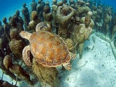 Sea Turtle swimming over underwater statues