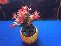 húsvéti kaktusz Plants, Plant, Planets