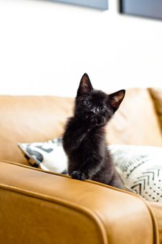5 Essential Things for the Best Kitten Care from top US lifestyle blogger Tabitha Blue of Fresh Mommy Blog!