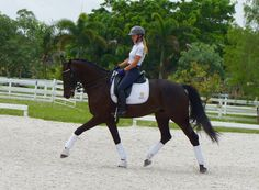 Dream Boat - Fabulous 2008 Imported KWPN black gelding with International flashy gaits! Definite ability to be competitive in the CDI ring, but still AA safe! Schooling PSG/I-I!