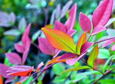 By Deena Stoddard.A stunning array of fall foliage captured on our property in rural Southwest Missouri. Natural World, Mother Nature, Missouri, Fine Art America, Cool Art, Plant Leaves, Photograph, Medium, Fall
