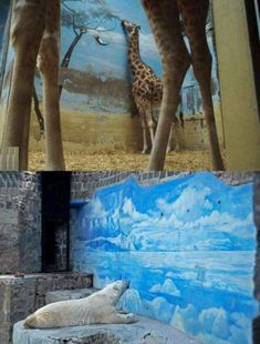 It's just too sad to look at. Please don't support animals in captivity.