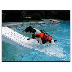 Pools are perilous to pets and wildlife...this cool product saves both! It's also wise then to have floating dog toys in your pool, checkout #BIONIC Pet Products today! www.bionicplay.com