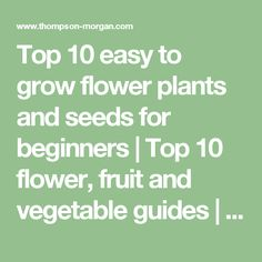 Top 10 easy to grow flower plants and seeds for beginners | Top 10 flower, fruit and vegetable guides | Thompson & Morgan