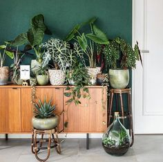 46 DIY Plant Stand ideas to Fill Your Living Room With Greenery These trendy Home Decor ideas would gain you amazing compliments. Check out our gallery for more ideas these are trendy this year. Indoor Garden, Indoor Plants, Home And Garden, Garden Planters, Potted Plants, Room With Plants, House Plants Decor, Plantas Indoor, Deco Nature