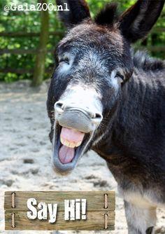 Donkey from GaiaZOO says Hi!