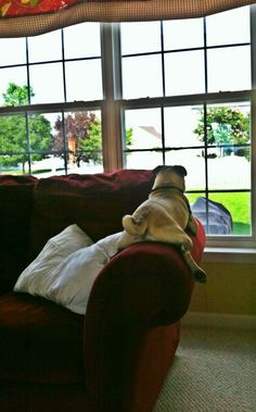 """""""All right Mr. Mailman, I'll just get nice and cozy here and wait for you to trespass into my domain. Then we'll see who's a good boy."""""""