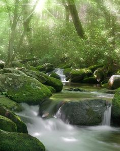 ✮ Beautiful waterfall surrounded by mossy rock found in the Smoky Mountains