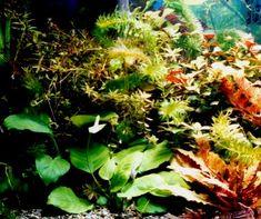 Planted Aquarium Fertilizer