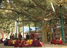 BODHI TREE - A Guide to Buddhism A to Z