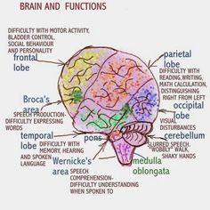Simplified brain … … | Pinteres…