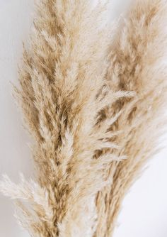 Gorgeous bunch of natural dried large pampas grass. Perfect for weddings and statement displays! Total length: approx 110 - 120cm Flower length: approx 70-80cm 3 stems per bunch. Please be aware the size of the stems/flower and tone and texture of the flower section will vary as these are a natural product, but most will be within the size ranges outlined above. Dried flowers are wrapped in tissue paper and then posted in a box or tube to ensure they arrive with you safely. Aesthetic Couple, Cream Aesthetic, Boho Aesthetic, Aesthetic Colors, Aesthetic Photo, Aesthetic Pictures, Photo Wall Collage, Picture Wall, Aesthetic Backgrounds