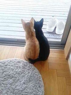 ....just look at the little tails!!!!