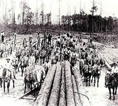"""Aldridge, TX - Texas Ghost Town - Aldridge Saw Mill - """"Buckers,"""" or choppers, saw pine trees, which have been stripped of branches, into smaller sized-logs for transport. Photo, circa early 1900s,"""