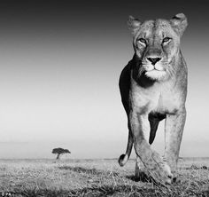 One of the images the self-taught photographer captured on the Masi Mara in Africa. He smo...