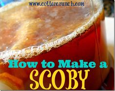 How to Make your own Kombucha Scoby - @Lindsay Cotter