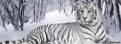 White Tiger Snow Facebook Cover - PageCovers.com