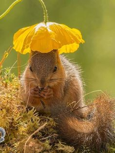 housekaboodle:  ok, now I can have a nice weekend after seeing this way too cute squirrel with a buttercup hat.