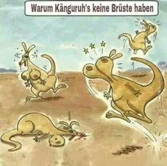 Warum Kängurus keine Brüste haben^^