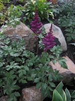 Chuck Does Art: Photo List of Plants for Shade Garden