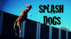 Splash Dogs! Ruger is doing it this year!!!