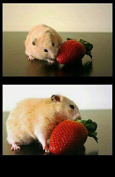 Lekker zo aardbei