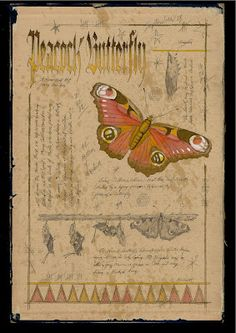"""Naturalist painting of a Peacock Butterfly. Done on the inside of an antiqued book cover.  Ink, watercolor and graphite marginalia. Approx.Size: 9.5"""" x 14"""" kenscottart@att.net Ken Scott American Frontier Artist."""