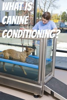 Do you have an athlete dog? Looking for a new type of conditioning? Or just need to get in shape?  Read about the benefits of canine conditioning here. http://dog-swim.com/files/en/user/cms/Service_Profile_Conditioning.pdf
