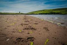 Horse Hoof tracks on the beach in Ireland. Horseback Riding in Dingle, Ireland. Horseback riding on the beaches, large cliff sides with breath taking landscapes. http://www.divergenttravelers.com/horseback-riding-in-dingle-ireland/ #loveireland #travel #seascape